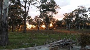 Beautiful sunset in the bush