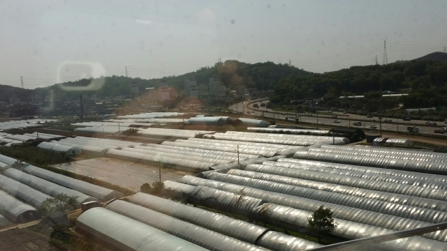 Farms in Korea seem to have a lot of plastic greenhouses. Note the busy highway and the uniform apartment buildings within a stone's throw