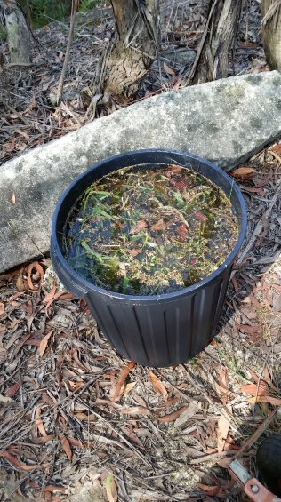 Drowning weeds to kill the seeds and make compost